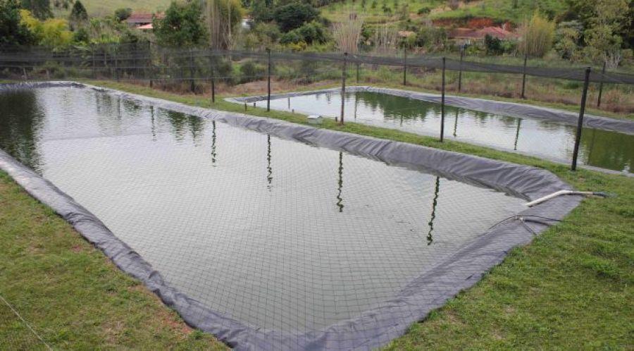 Criação de tilápias cresceu 80% no Brasil em 10 anos