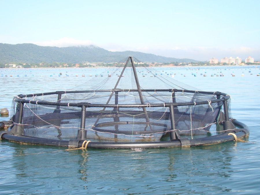 Desenvolvimento da maricultura no país - saiba mais sobre a regionalização da produção