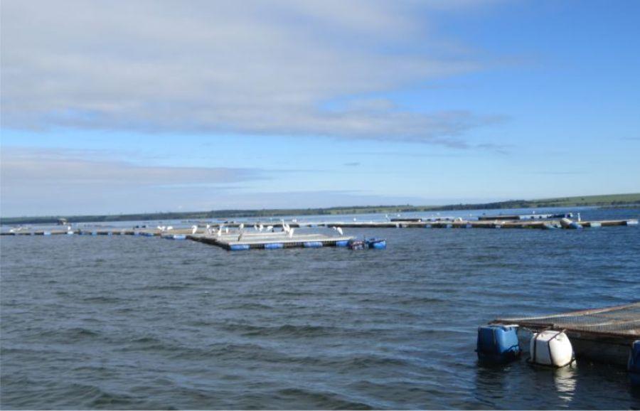Financiamento garante investimentos em piscicultura em Aparecida do Taboado