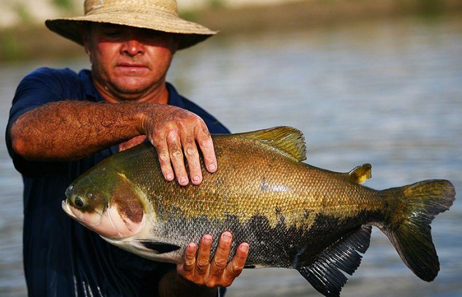 Governo do MT promove capacitações para técnicos da piscicultura