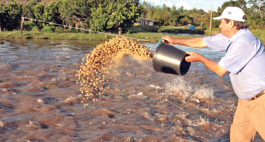 Importância da alimentação dos peixes
