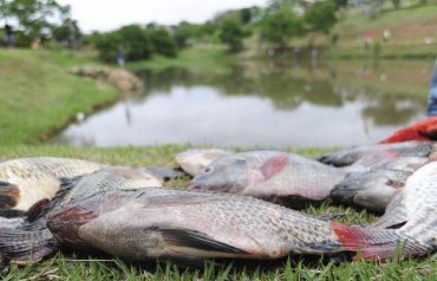O que é decoada e como pode afetar o cultivo de peixes?