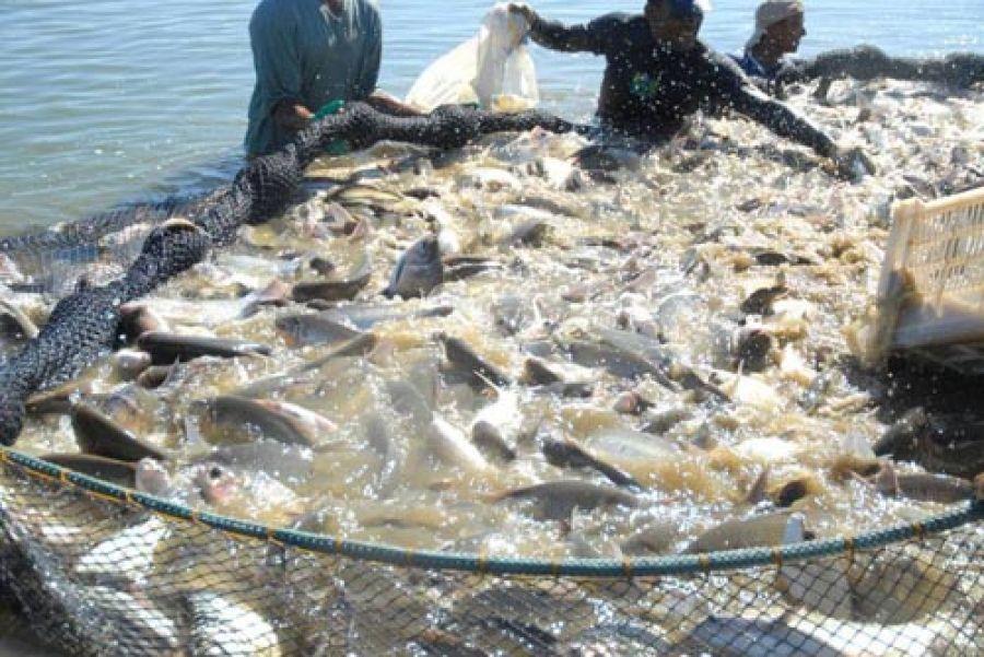 Peixe acreano é apresentado em feiras nacionais e internacionais