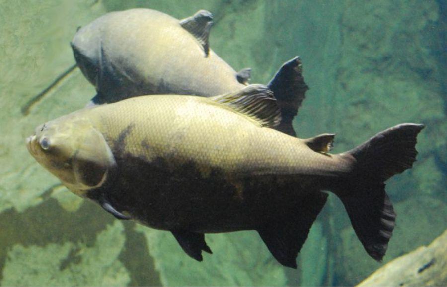 Produção de peixes em Rondônia é expandida com apoio do governo