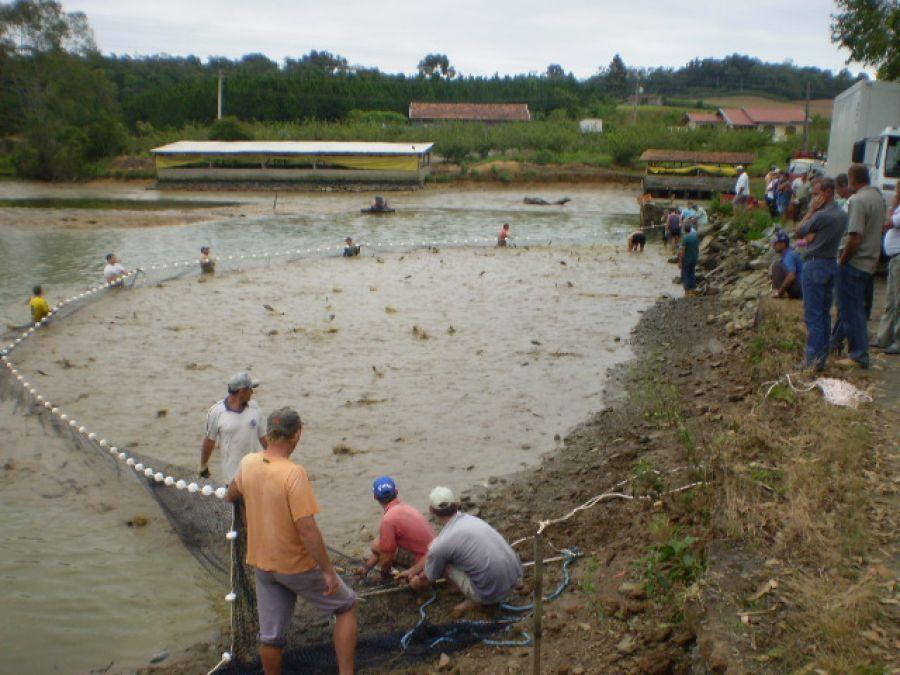 Saiba como conseguir uma licença ambiental para a piscicultura