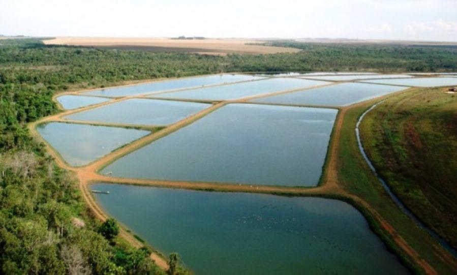Saiba como funciona o sistema intensivo de criação de peixes
