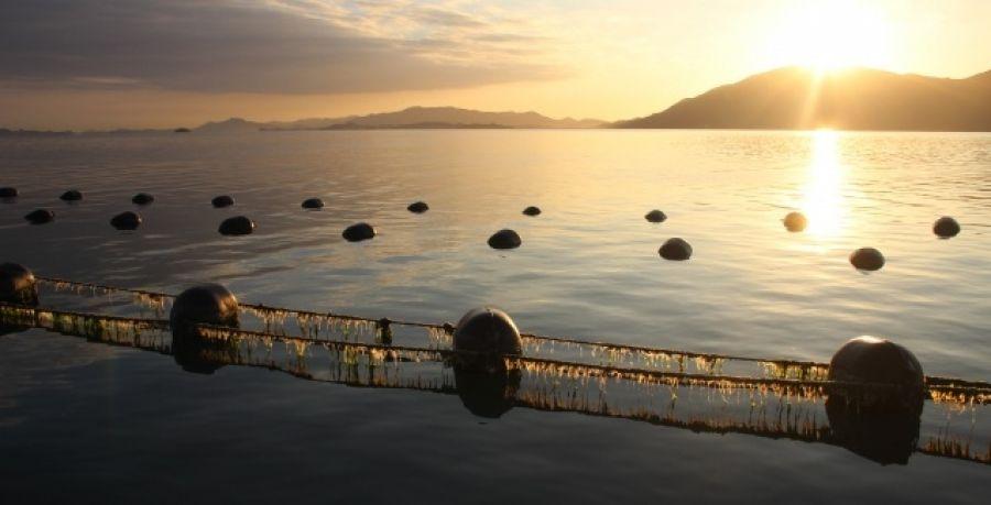 Santa Catarina terá plano estratégico para o desenvolvimento da maricultura