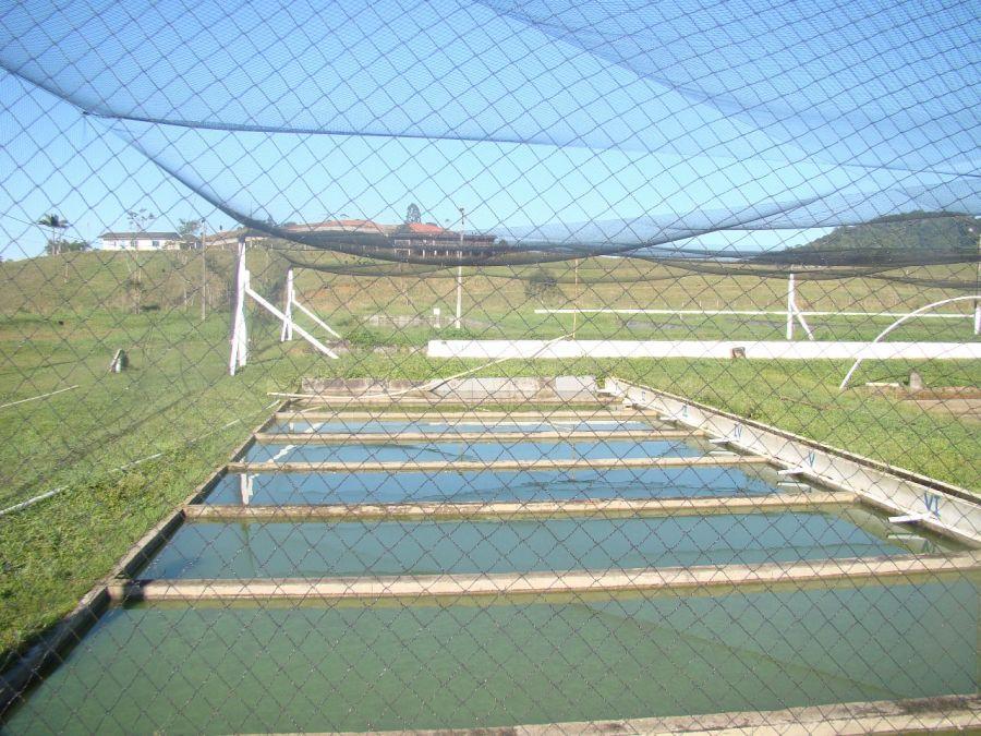 Veja como diminuir as perdas na piscicultura