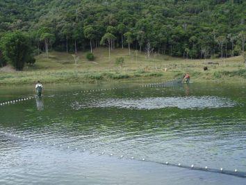 Aprenda a usar corretamente a rede de arrasto na piscicultura