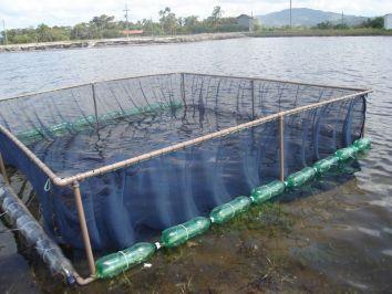 Criação de peixes em cativeiro pode ser uma excelente alternativa de negócio