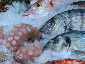 Criada a Câmara Setorial da Produção e Indústria de Pescado