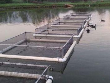 Cuidados com a piscicultura no inverno