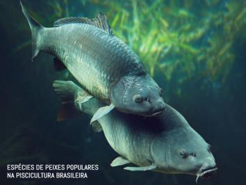 Espécies de peixes populares na piscicultura brasileira