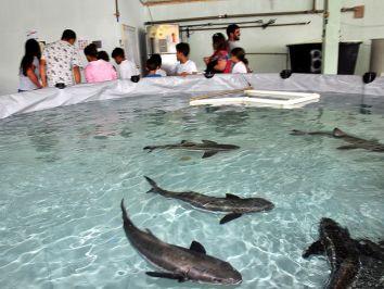 Inaugurado o laboratório de Bijupirá na Praia de Bananal (RJ)