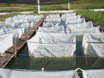 Os impactos positivos da sustentabilidade na aquicultura