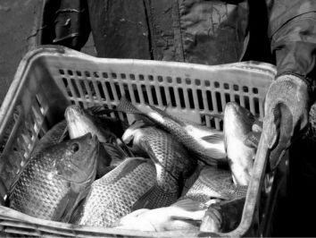 Peixe BR se posiciona sobre a suspensão das exportações para a UE