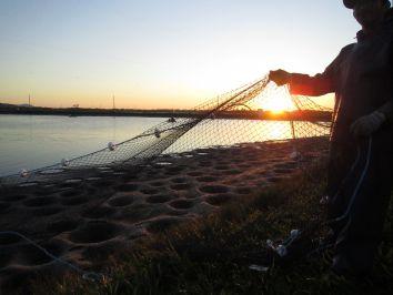 PEIXE BR solicita atenção do MAPA à qualidade dos peixes importados