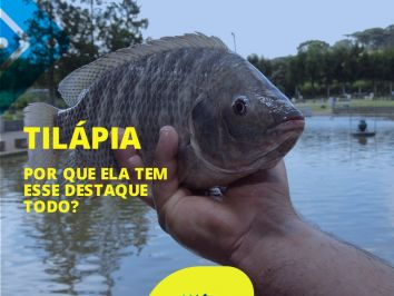 Por que a tilápia ganhou tanto espaço e é hoje um dos peixes favoritos na exportação?