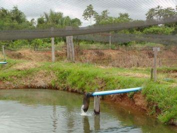 Problemas na piscicultura: Entenda como as pragas podem prejudicar a produção