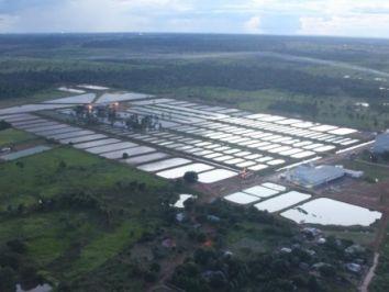 Produtores investem na criação de peixes da espécie Trairão da Amazônia, no interior do ES