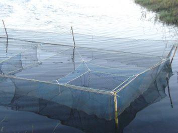 Tanque-rede: Saiba mais sobre esse sistema de criação de peixes